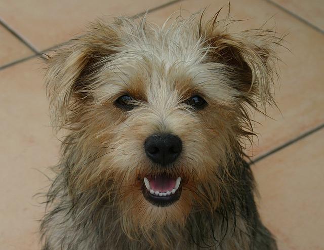 dog-14460_640