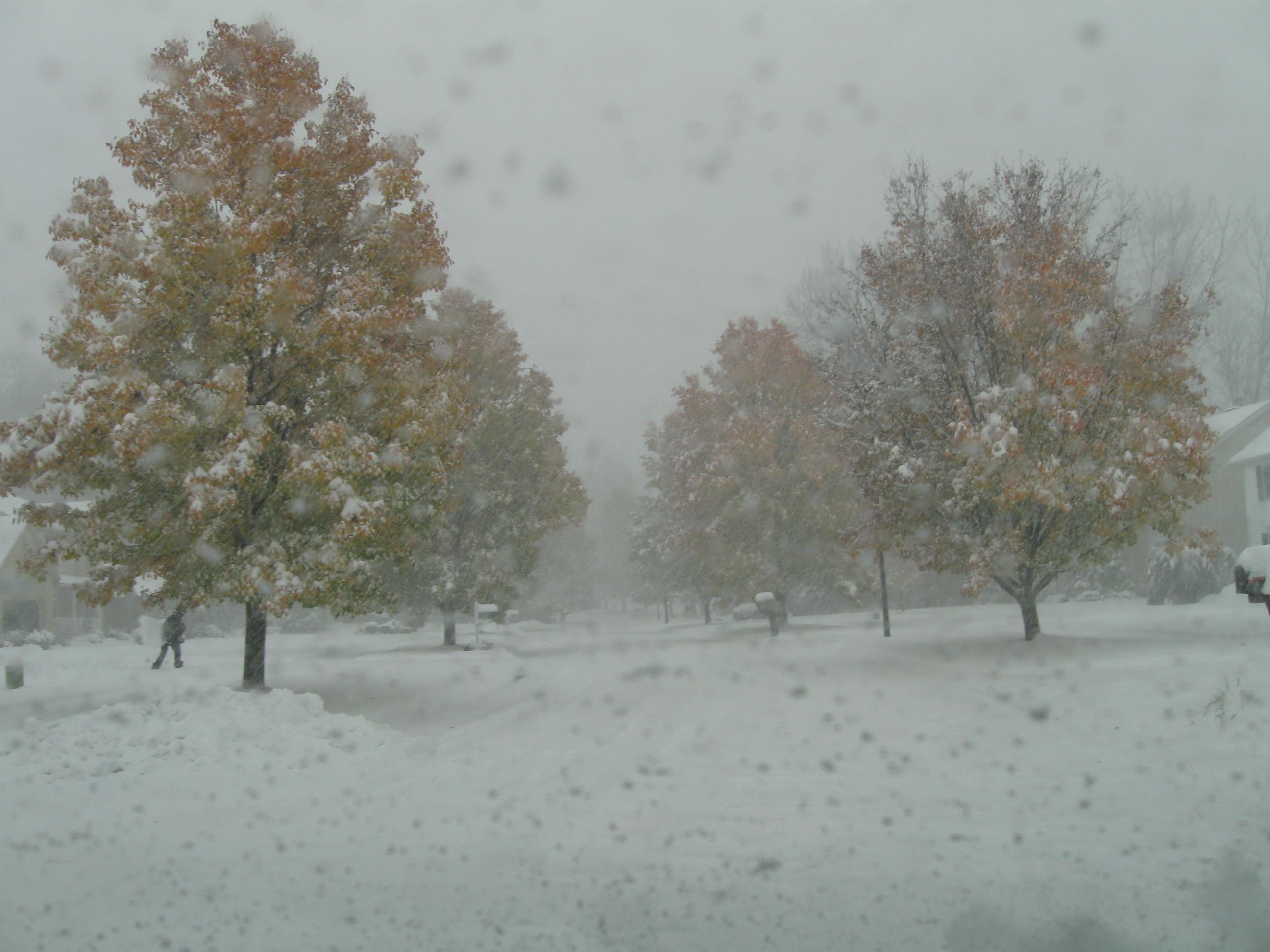 Fall Nov 13 (3)
