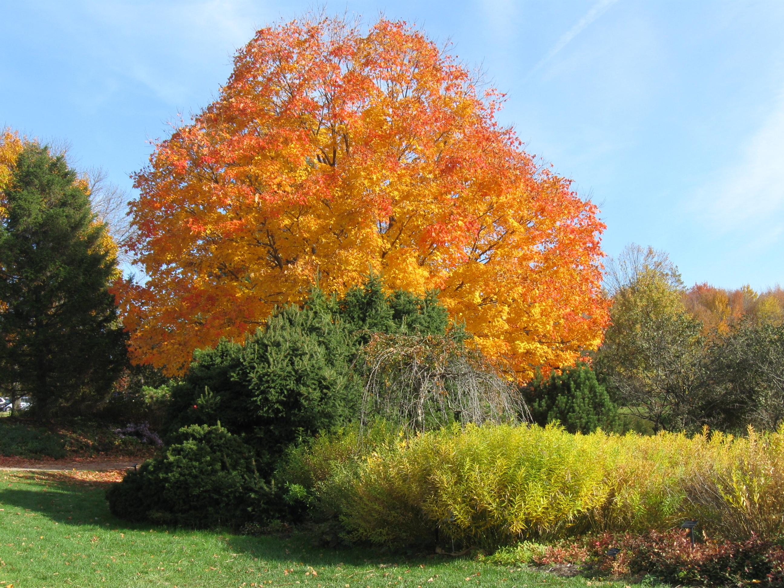 Holden Arboretum (1)