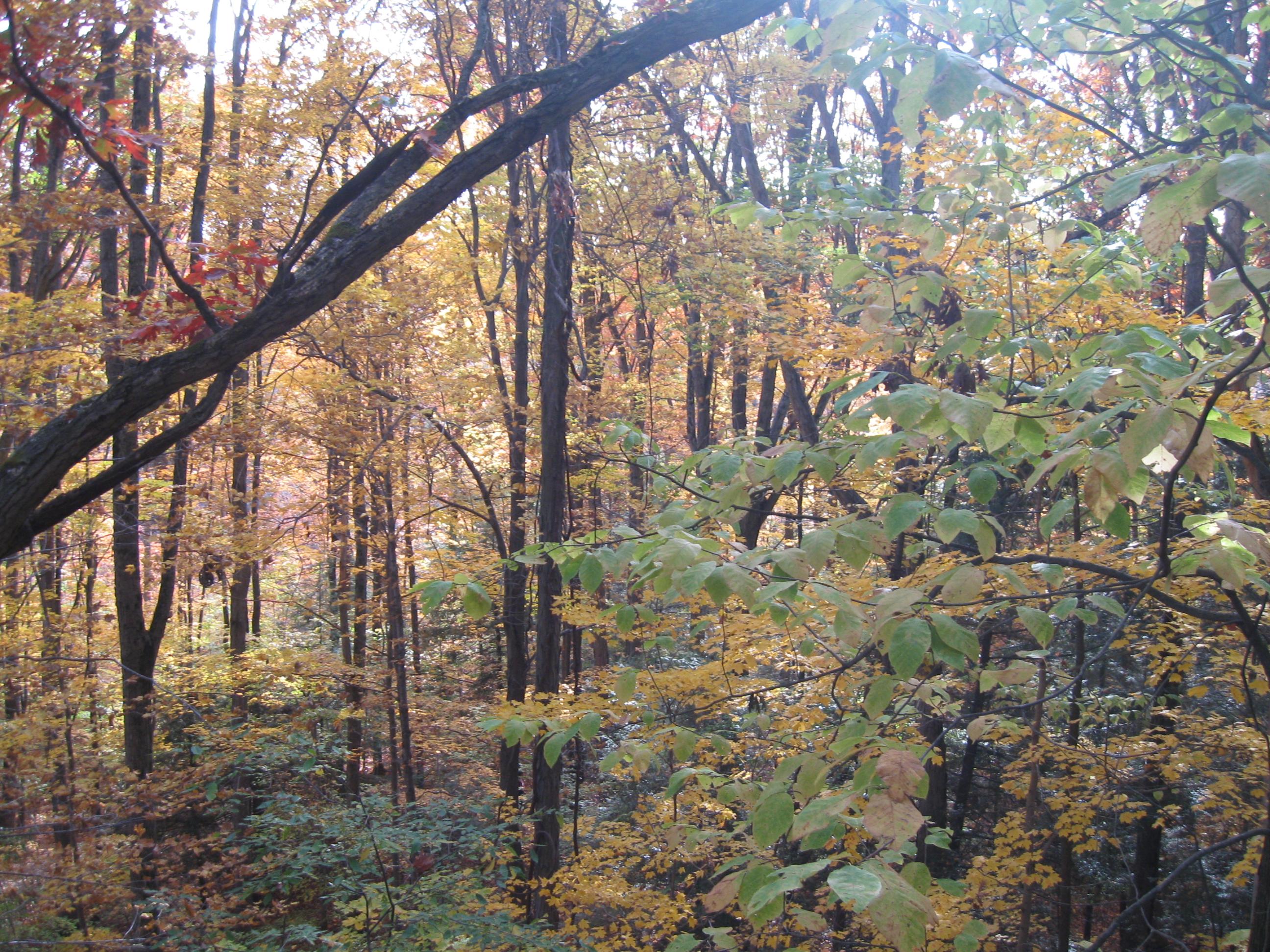 Holden Arboretum (4)