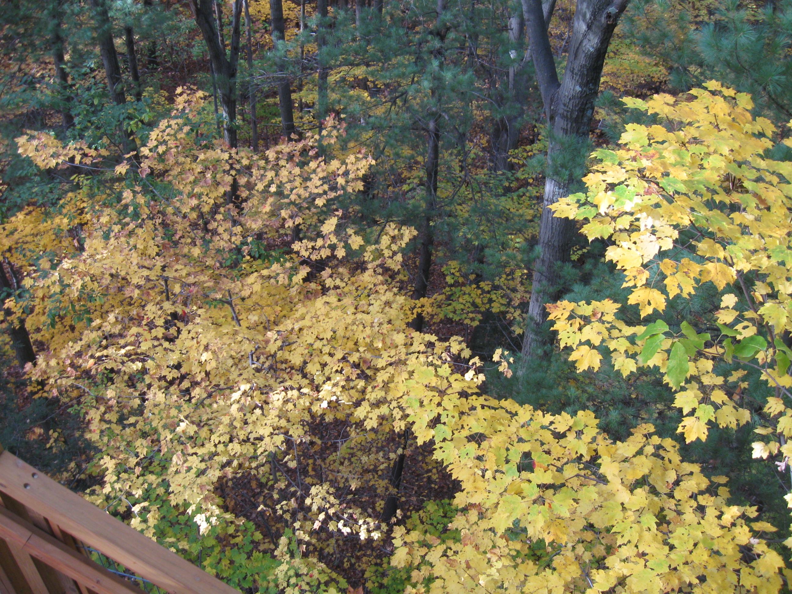 Holden Arboretum (6)