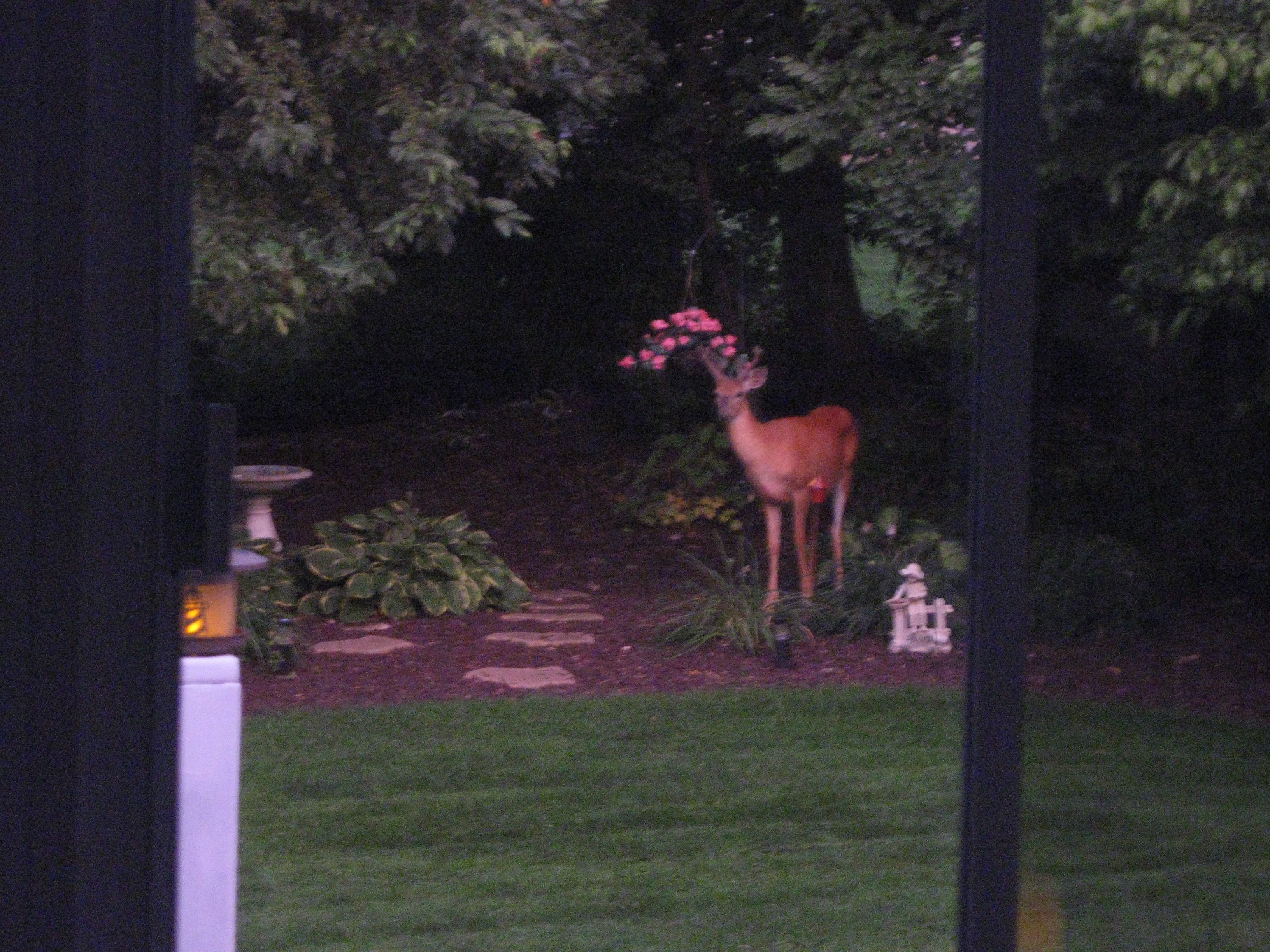 Nighttime Visitor (1)